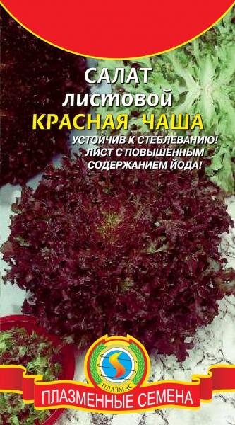 агрономия фото возделывание красног цикория салатного сорта